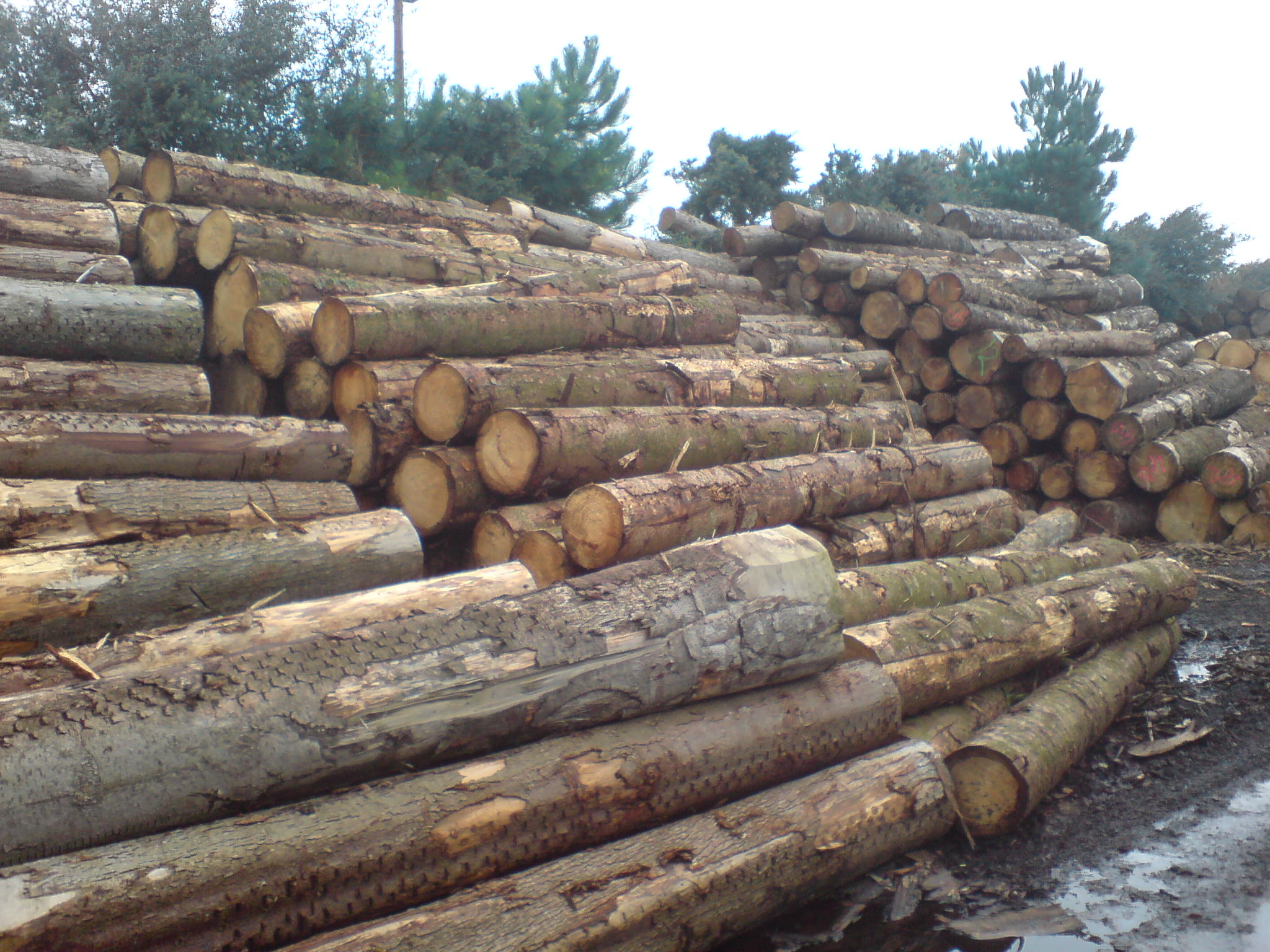 Truro Sawmills Home